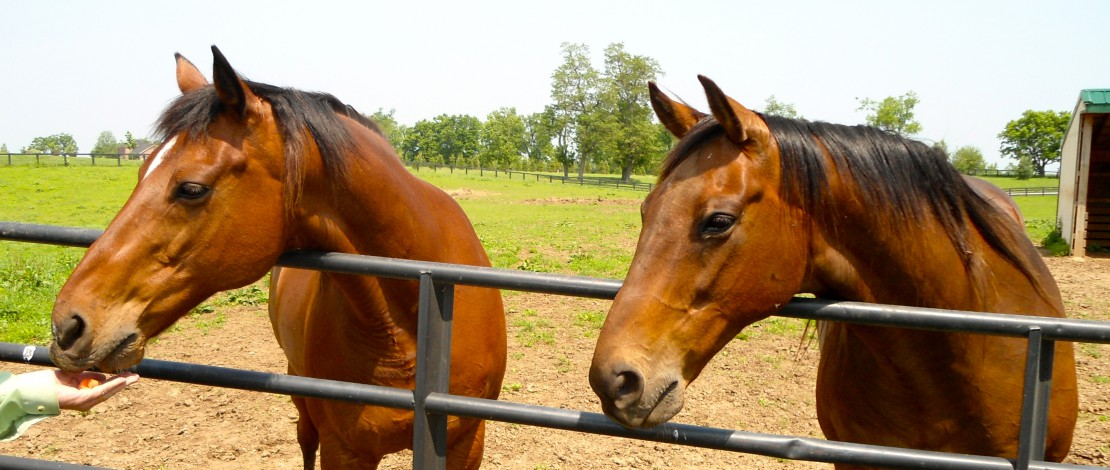 horses-cropped